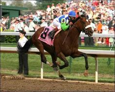 Barbaro flying to glory - 2006 KY Derby Preakness Stakes, Triple Crown Winners, Derby Winners, Sport Of Kings, Thoroughbred Horse, Racehorse, Equestrian Style, Horseback Riding, Horse Riding