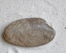 You're strolling along the shoreline of Lake Michigan combing the beach for interesting stones and driftwood or perhaps beach glass. You find a gray beach s… Saugatuck Michigan, Lake Michigan Beaches, Horn Coral, Crinoid Fossil, Rock Identification, Petoskey Stone, Rock Hunting, Oceans Of The World, Rock Collection