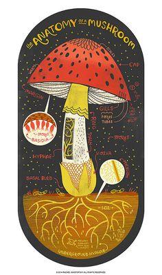 anatomy of a mushroom by rachel ignotofsky on etsy