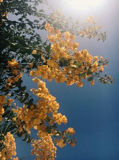 Sunny photo of tree, flowering with yellow blossoms. Spring Aesthetic, Nature Aesthetic, Flower Aesthetic, Aesthetic Photo, Aesthetic Pictures, Aesthetic Yellow, Aesthetic Grunge, Aesthetic Backgrounds, Aesthetic Iphone Wallpaper
