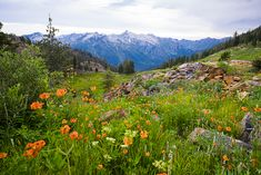 siligo meadows trinity alps wilderness images | Trinity Alps Wilderness – Four Lakes Loop trip report » Corporate ...