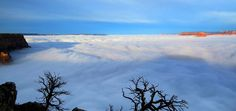 """""""A Rare Weather Phenomenon Is Causing a Sea of Clouds to Fill the Grand Canyon Helen Regan, time.com The fog is able to stick and build up in the Grand Canyon when there is no wind A rare weather..."""