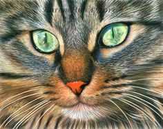 Lucy , a drawing by Karen Hull