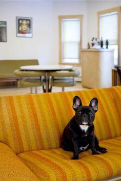 Good dog. Bad sofa.