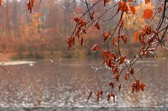 Jour_d_automne_sous_la_pluie_-15.jpg (1651×1096)