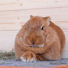 disapprovingrabbits.com is AWESOME!  This has got to be the most disapproving face I have ever seen.