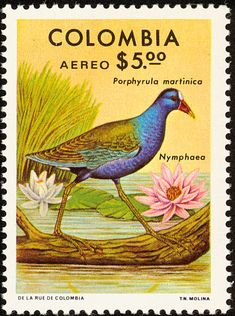 Colombia bird stamps - mainly images - gallery format Color Celeste, Bird Types, Cali Colombia, Stamp Catalogue, Flower Stamp, Bird Cards, Water Lilies, Postage Stamps, Pop Art