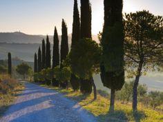 Country Road Towards Pienza, Val D' Orcia, Tuscany, Italy Lámina fotográfica por Doug Pearson en AllPosters.es