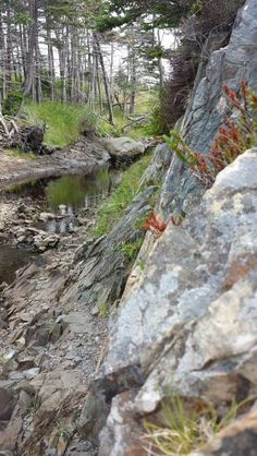 A lillte river