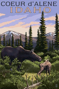 Couer D'Alene, Idaho - Moose and Baby Calf (Art Prints available in multiple sizes)