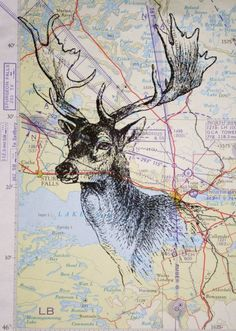 deer and map