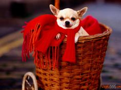 Small dog breeds photo