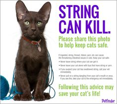 String can kill. Please share to help keep cats safe.