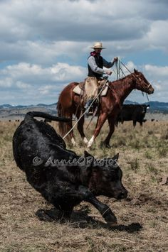 "Hank Ward riding ""Tugboat"" at a branding on the Cowan Ranch. Tug Boats, Irons, Calves, Horses, Photography, Life, Animals, Baby Cows, Photograph"