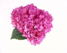 Fabulosas flores veraniegas para arreglos florales de boda.: Hortensia