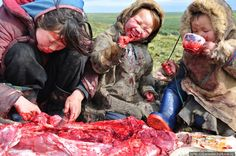 Eurasia: Nenets children eating raw reindeer meat, Siberia (Northern Asia), Russia