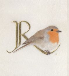 ✍ R is for Robin - typography styles and calligraphic art - Kathy PIckles. Robin Bird Tattoos, Robin Tattoo, Tattoo Bird, Alphabet Art, Letter Art, Graffiti Alphabet, Illuminated Letters, Illuminated Manuscript, Robin Vogel