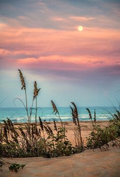 Beach at Sunset / Check out Charter Arms on Pinterest or visit our web-sight at https://twitter.com/MGProjekt