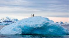 'While touring the waterways along the Antarctic Peninsula, we saw two Adelie Penguins watching their surroundings from the top of an iceberg.' - David Menaker