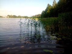 Nad jeziorem Czarne (pomiędzy miejscowościami  Karolin i Białorzeczka).
