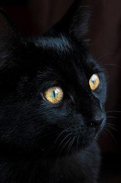 My mannie cat