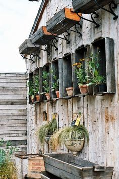Nice wall display.  Could probably tack up burlap or something over for winter and protect your plants.  Even stamp the burlap w/ pretty design.