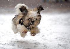 10 adorables animales jugando en la nieve por primera vez - ¿Estás listo para ver una de las más tiernas galerías de fotos en la nieve? Se trata de una recopilación de 10 fotografías de tiernos animales (que han subido sus dueños a la red) jugando en la nieve por primera vez. Algunos de ellos tienen una reacción bastante diferente a la de los otros, pero ... #animales, #vive=Personas,animales,lavidaytodossussecuaces.  http://www.vivavive.com/10-adorables-animales-j