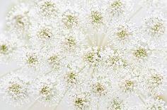 Lace | by Jacky Parker Floral Art