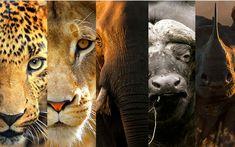 Kenya Big 5 Safari Days) - World Adventures Tours Safari Adventure, Adventure Tours, African Animals, African Safari, Animal Rights Lawyer, Dangerous Animals, Nocturnal Animals, Big 5, Animal Species
