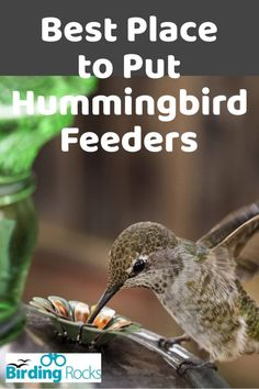The best place to put a hummingbird feeder is in a partially shady location, which will prevent the nectar from spoiling quickly. Hummingbird Bird Bath, Homemade Hummingbird Feeder, Hummingbird Plants, Sugar Water For Hummingbirds, How To Attract Hummingbirds, How To Attract Birds, Attracting Hummingbirds, Diy Bird Feeder, Humming Bird Feeders