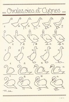 How to draw a goose & swan
