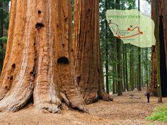 Uitgelicht: De fly drive Amerika - Western Wonders. Dag 7: Op naar het wereldberoemde Sequoia Nationaal Park. Hier kun je de enorme mammoetbomen bewonderen die wel een hoogte kunnen bereiken van meer dan 80 meter! goedkope vakantie http://www.reispot.nl