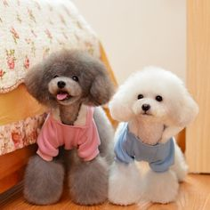 Cute Baby Cats and Dogs Cute Baby Cats, Baby Dogs, Cute Babies, Dog Haircuts, Cute Puppies, Dog Cat, Teddy Bear, Toys, Hair Cut
