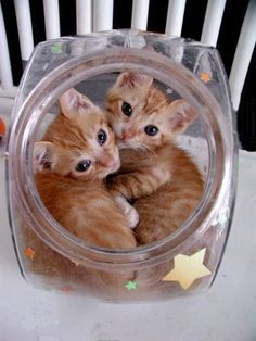 Lovely kittens inside a jar!