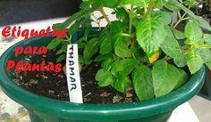 Etiquetas para identificar plantas