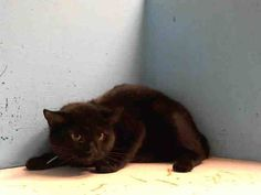 TO BE DESTROYED 11/5/13 Manhattan Center  My name is WINKY. My Animal ID # is A0983511. I am a male black domestic sh mix. The shelter thinks I am about 1 YEAR 1 MONTH old.  I came in the shelter as a OWNER SUR on 10/29/2013 from NY 10451, owner surrender reason stated was TOO MANY P. I came in with Group/Litter #K13-158462. Owner says she's beautiful and sweet.  https://www.facebook.com/photo.php?fbid=689383657740136&set=a.576546742357162.1073741827.155925874419253&type=3&theater