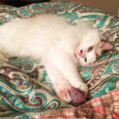 always bringing mice to bed