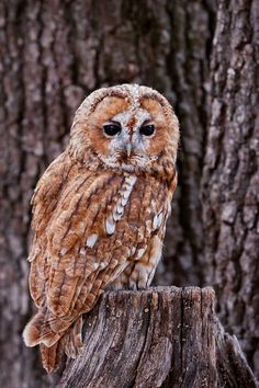 Owl via Wild Earth on Tumblr