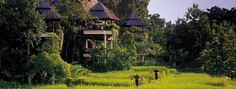 Chiang-Mai & Chiang-Rai in Northern Thailand. Great pair of places to plant yourself for a while. Pictured here, Chiang-Mai. Chiang Mai Thaïlande, Chaing Mai, Hotels And Resorts, Best Hotels, Top Hotels, Luxury Hotels, Thailand Tourism, Thailand Travel, Thailand Resorts