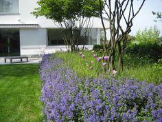 Ursina Luzi, Gartenplanung, Bepflanzung, Blumen, Stauden, Amelanchier, Felsenbirne Plants, Planting, Plant, Planets