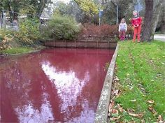 The third angel poured out his bowl on the rivers and springs of water, and they became blood. (Revelation River turns red in the Netherlands End Times Signs, South Holland, End Of Days, Eucharist, In Ancient Times, Natural Phenomena, Water Supply, Netherlands