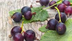 josta Black Currants, Korn, Royalty Free Images, Smoothie, Plum, Berries, Fruit, Vegetables, Garden