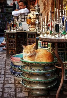 Cats make themselves comfortable the world over. Here in Marrakech Crazy Cat Lady, Crazy Cats, I Love Cats, Cute Cats, Ginger Cats, Here Kitty Kitty, Sleepy Kitty, Arabian Nights, North Africa