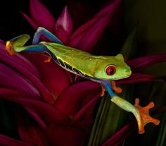 This beautiful fellow is sporting the full color spectrum!
