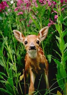 .Beautiful young fawn looks like its smiling for the camera! <3