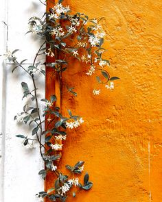 Orange Aesthetic, Nature Aesthetic, Flower Aesthetic, Aesthetic Photo, Flor Iphone Wallpaper, Wallpaper Backgrounds, Photo Wall Collage, Picture Wall, Aesthetic Pictures
