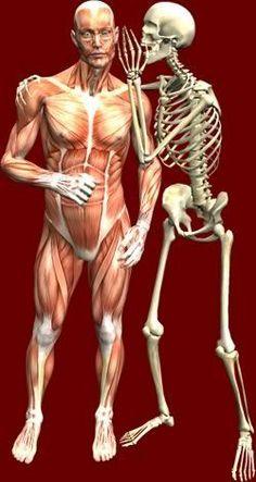 el esqueleto aconseja a los músculos.