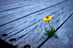 """""""Solitary beauty can be found in the most unlikely places. You Dont Say, Original Quotes, Word 2, English Quotes, Marketing, Just Amazing, Me Quotes, Sayings, Plants"""