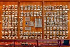 Mutter Museum, Philadelphia.  Run by the centuries-old College of Physicians of Philadelphia.  Contains chronicles the abnormalities and diseases that ravage human flesh.