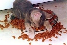 眠る猫14